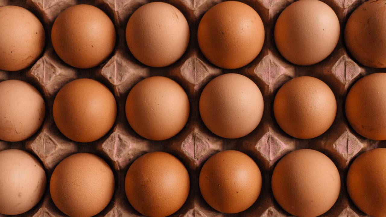 Study warns eating omelets every day may jeopardize heart health