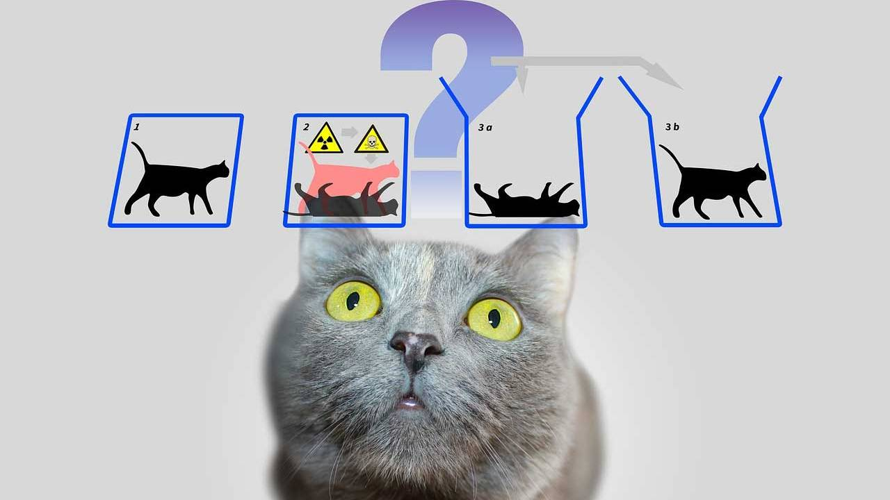 Yale might be able to save Schrödinger's Cat