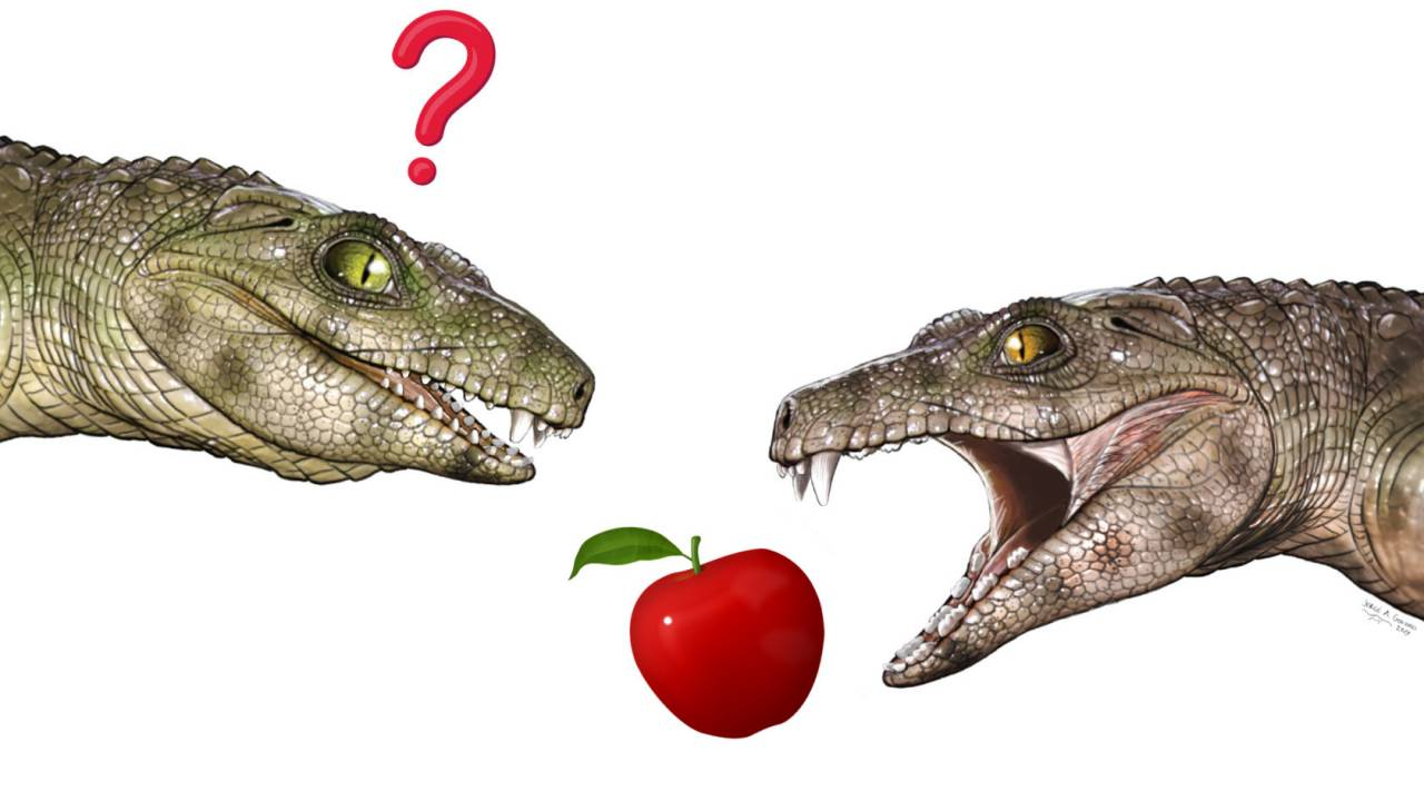 Vegetarian crocodile ancestors give researchers a surprise