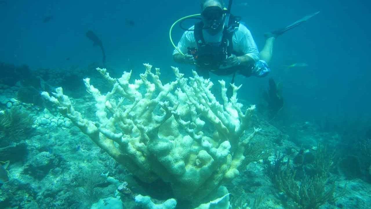 Global warming not the sole cause of coral reef bleaching