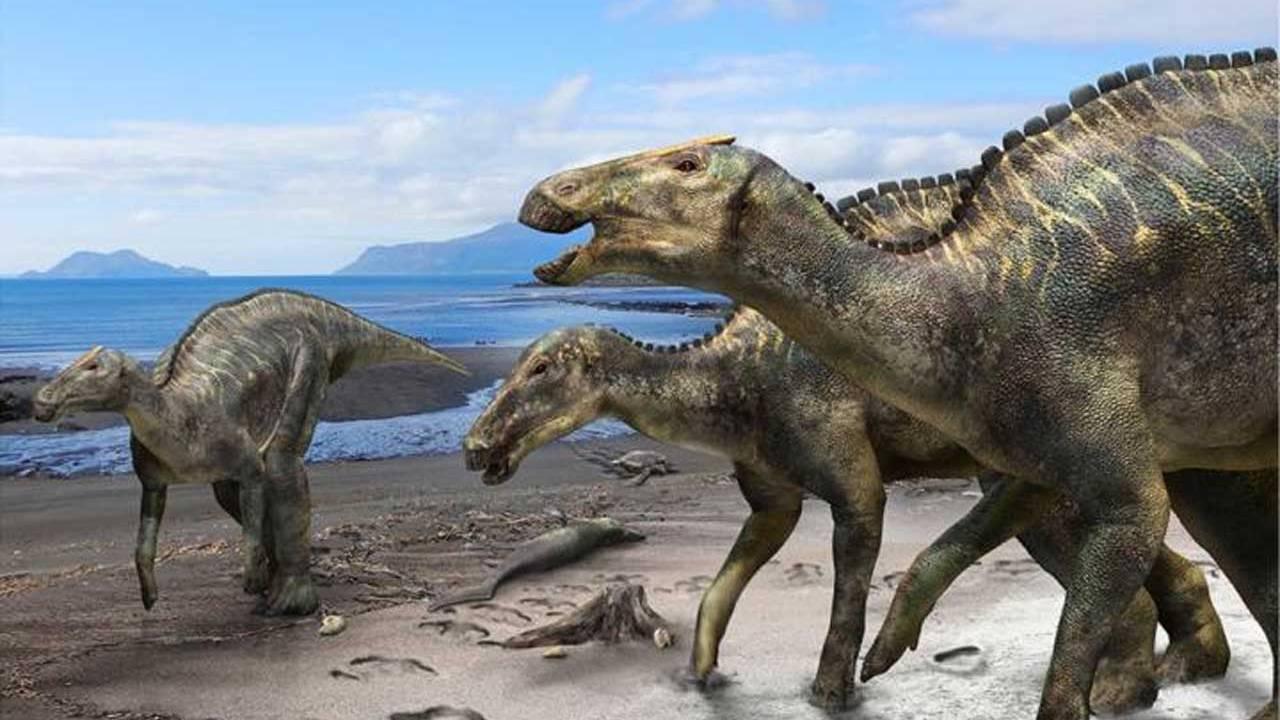Scientists dub new duck-billed dino Kamuysaurus japonicus