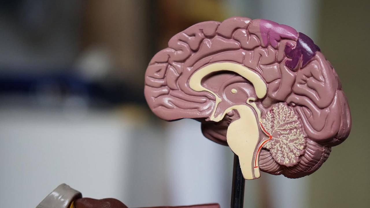 Inflammation triggered by obesity may cause brain damage