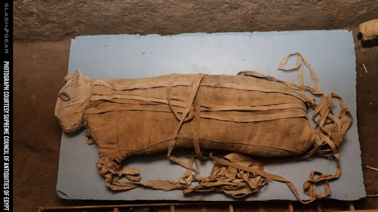 Five lion cub mummies found in Egypt: Do you know this cat goddess?