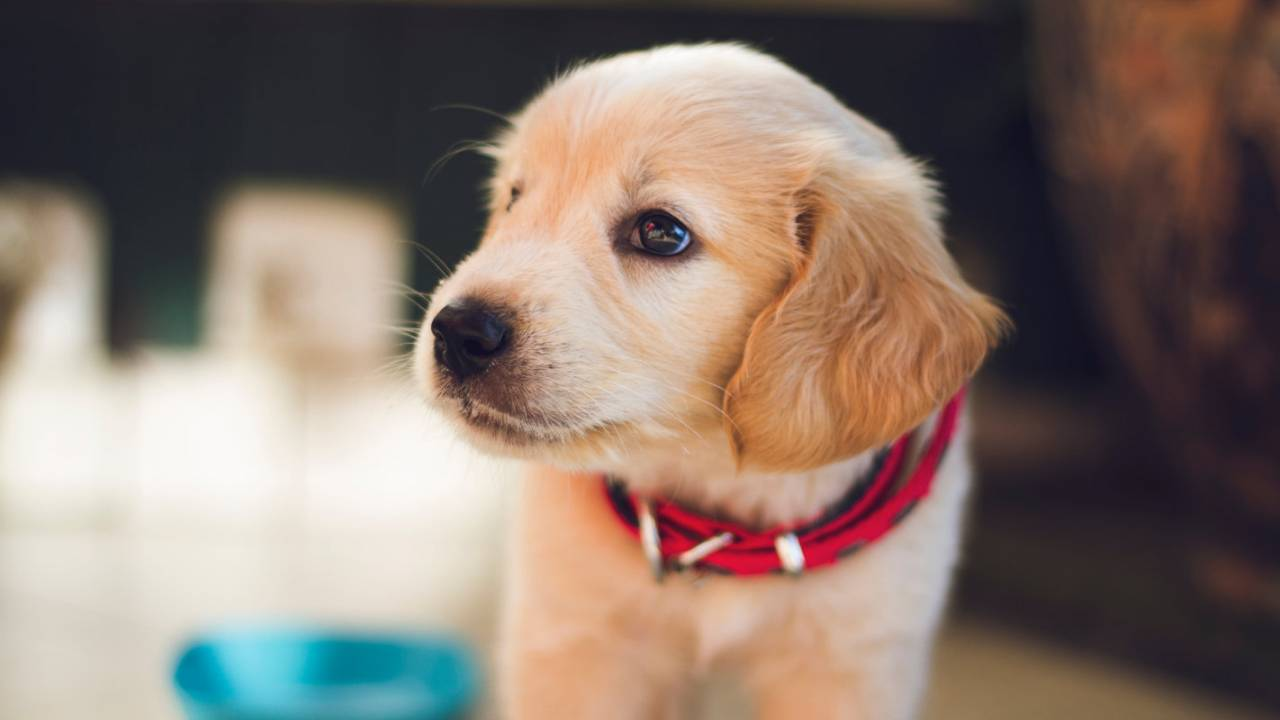 Pet store puppies blamed for drug-resistant infection outbreak