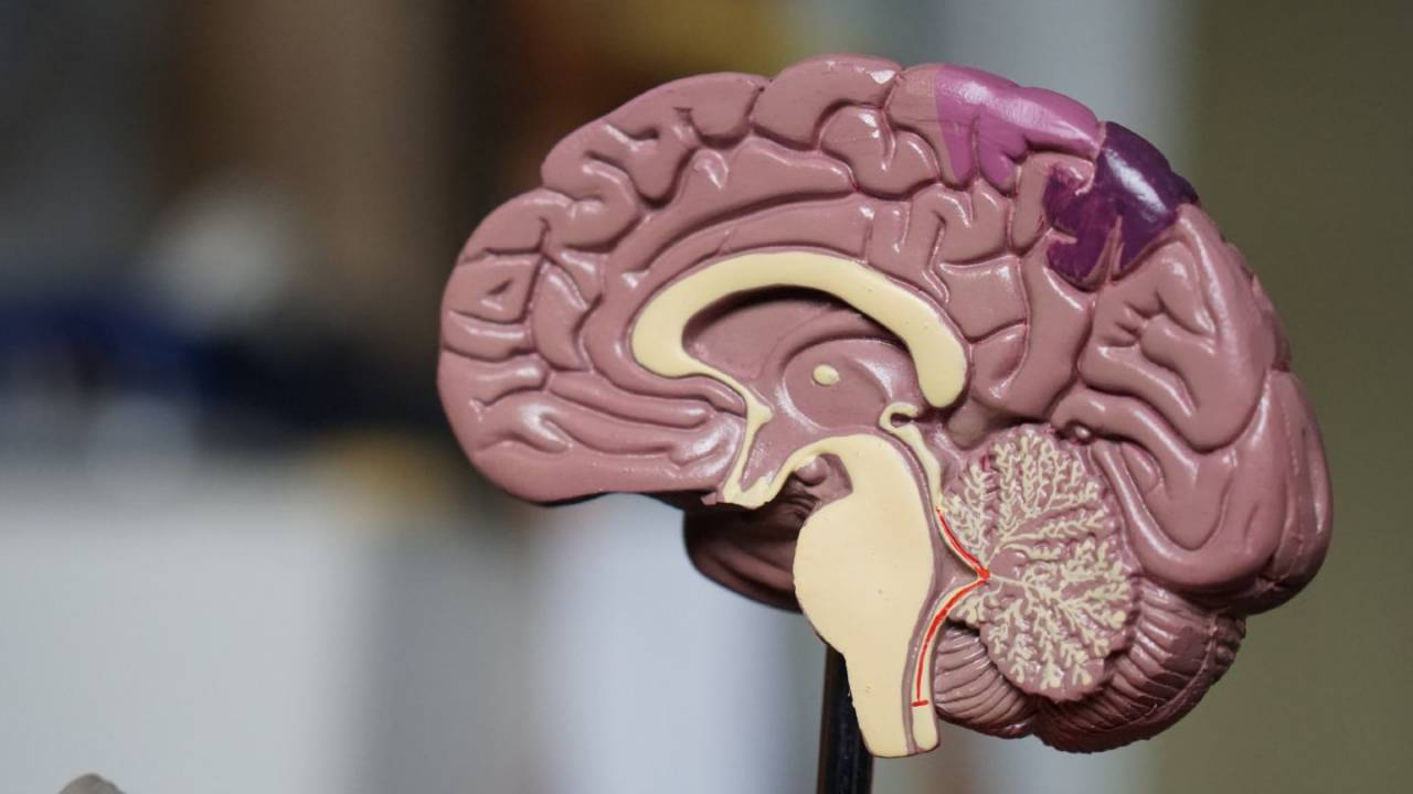 Study details the lifestyles that may soften impact of inherited dementia