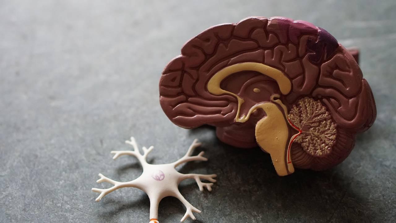 Having an optimistic partner may help prevent Alzheimer's disease