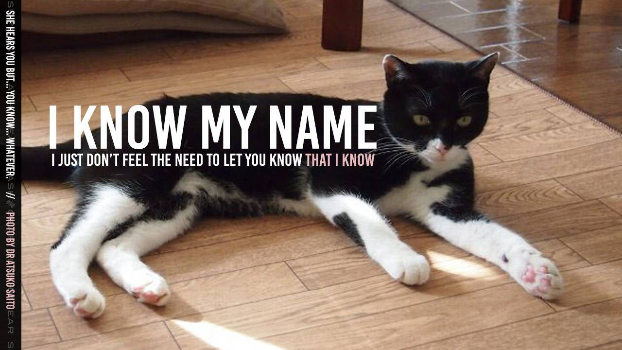 Your cat recognizes its name, even if they ignore your call