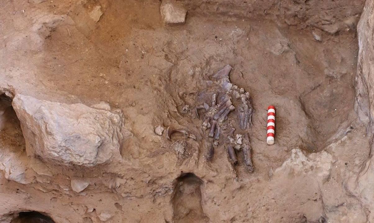 Groundbreaking Neanderthal remains reignite the death rite debate