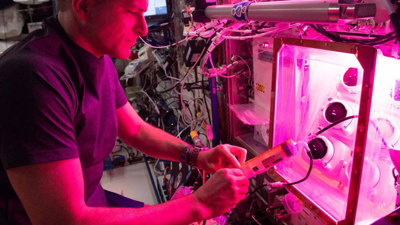 Space veggies may be healthy, but watering them is tricky
