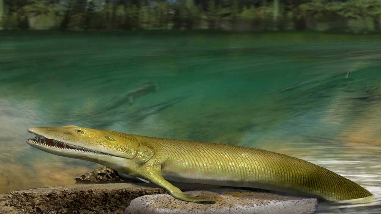 Ancient fish fossil sheds details on human hand evolution