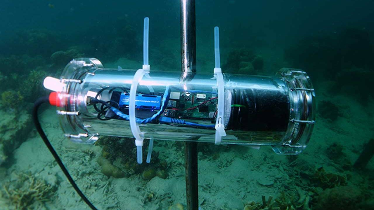 Intel and others use AI-powered solution to monitor coral reef resiliency