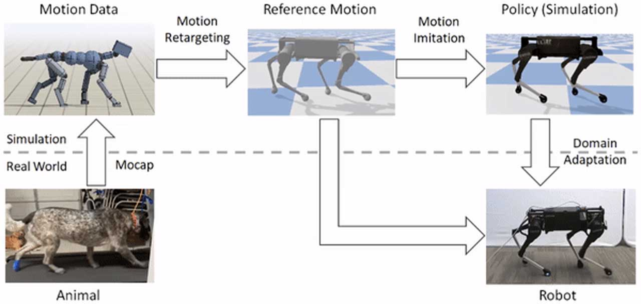 Researchers teach robots to move more like animals