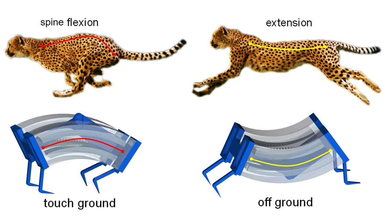 Scientists build the fastest soft robots ever based on the cheetah