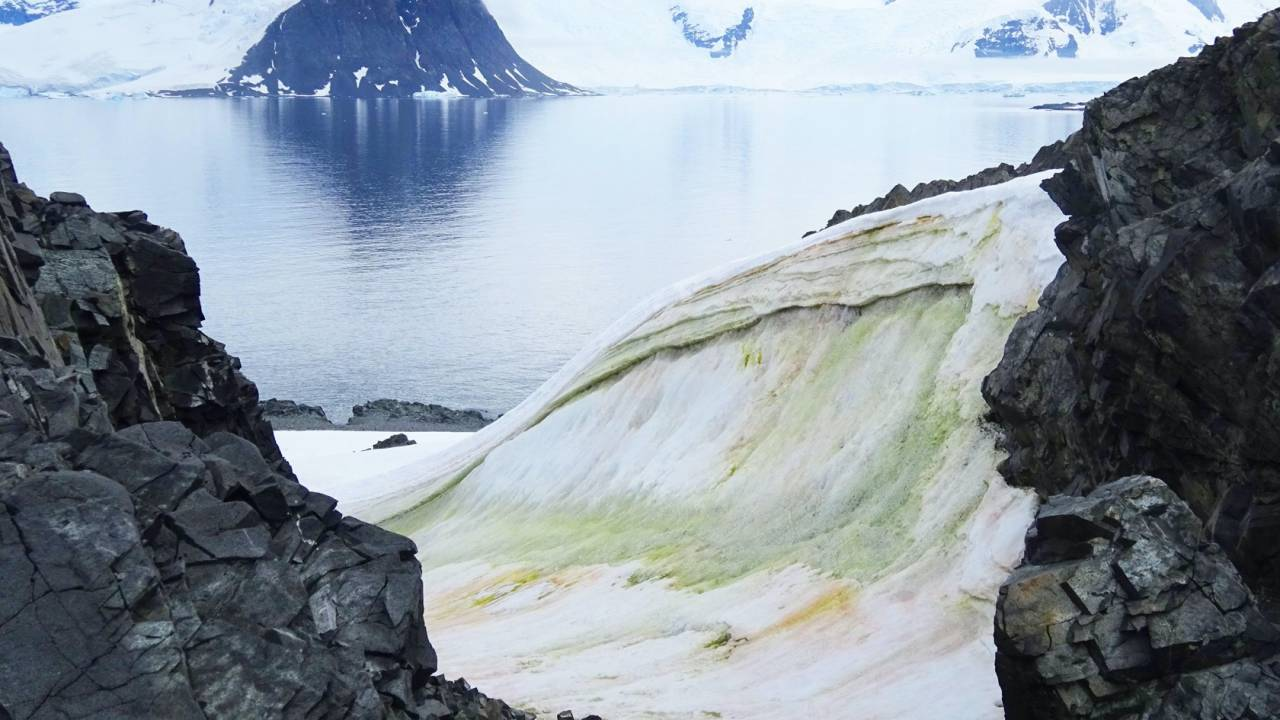 Antarctic snow is turning green and climate change is to blame