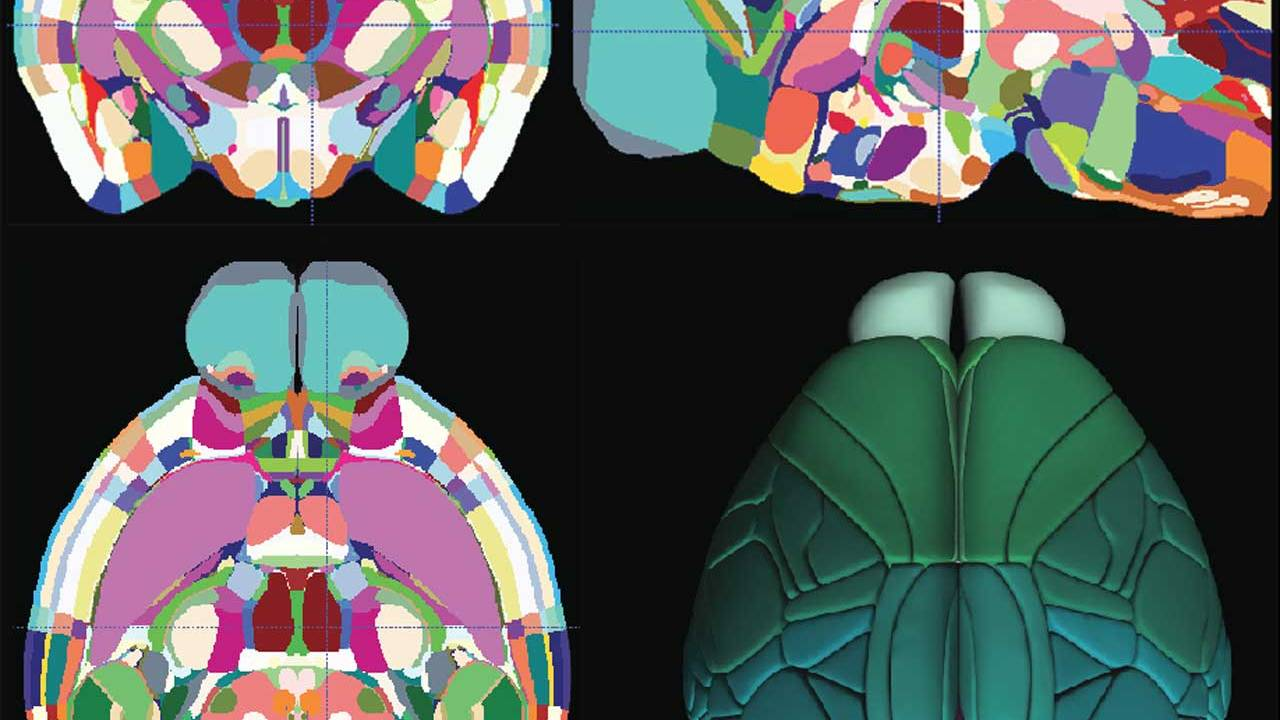 The first high-resolution 3D map of the mouse brain has been completed