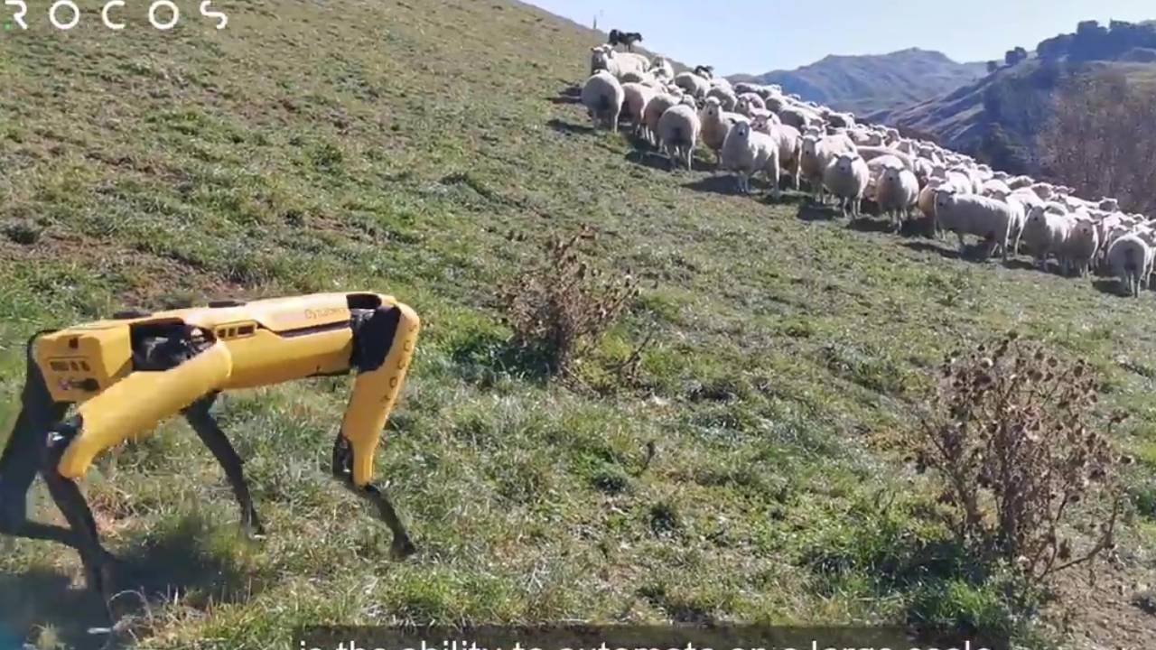 Spot robot dog could soon be tending farms and herding sheep