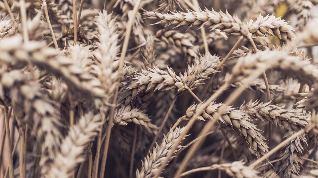 Popular fiber supplements recalled: FDA warns of plastic risk