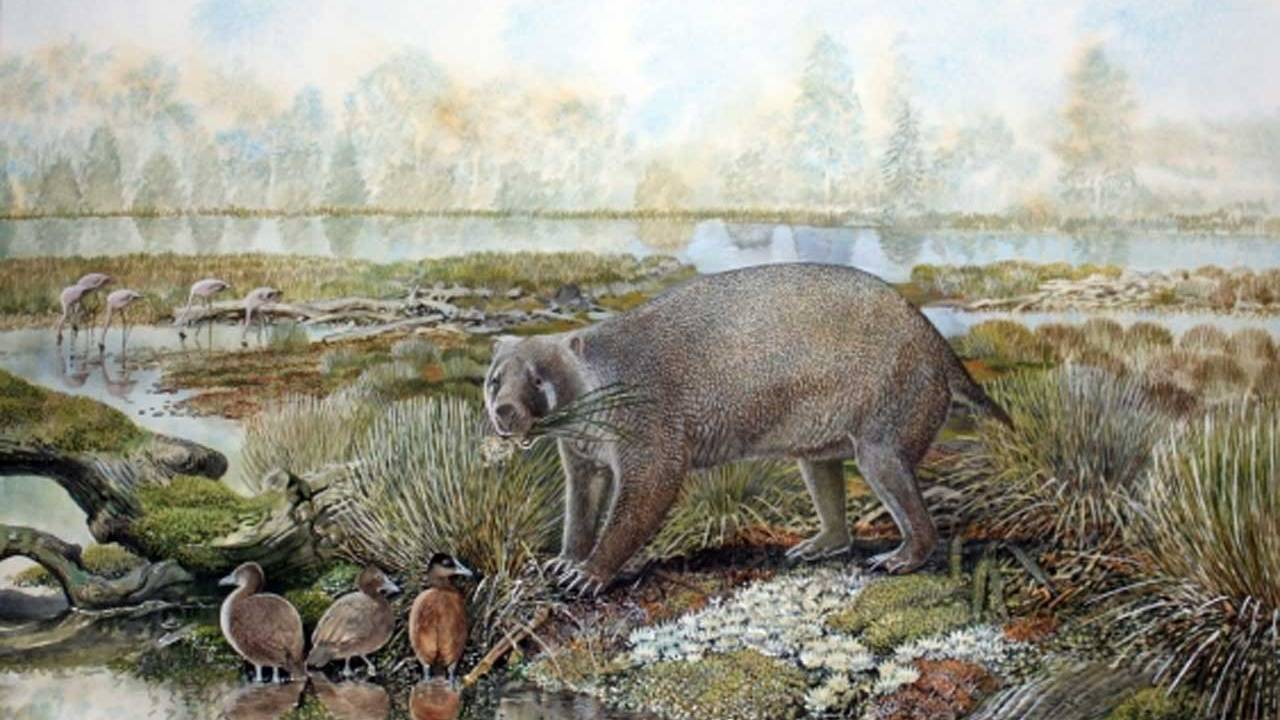 Researchers discovered an extinct family of giant wombat in the Australian desert