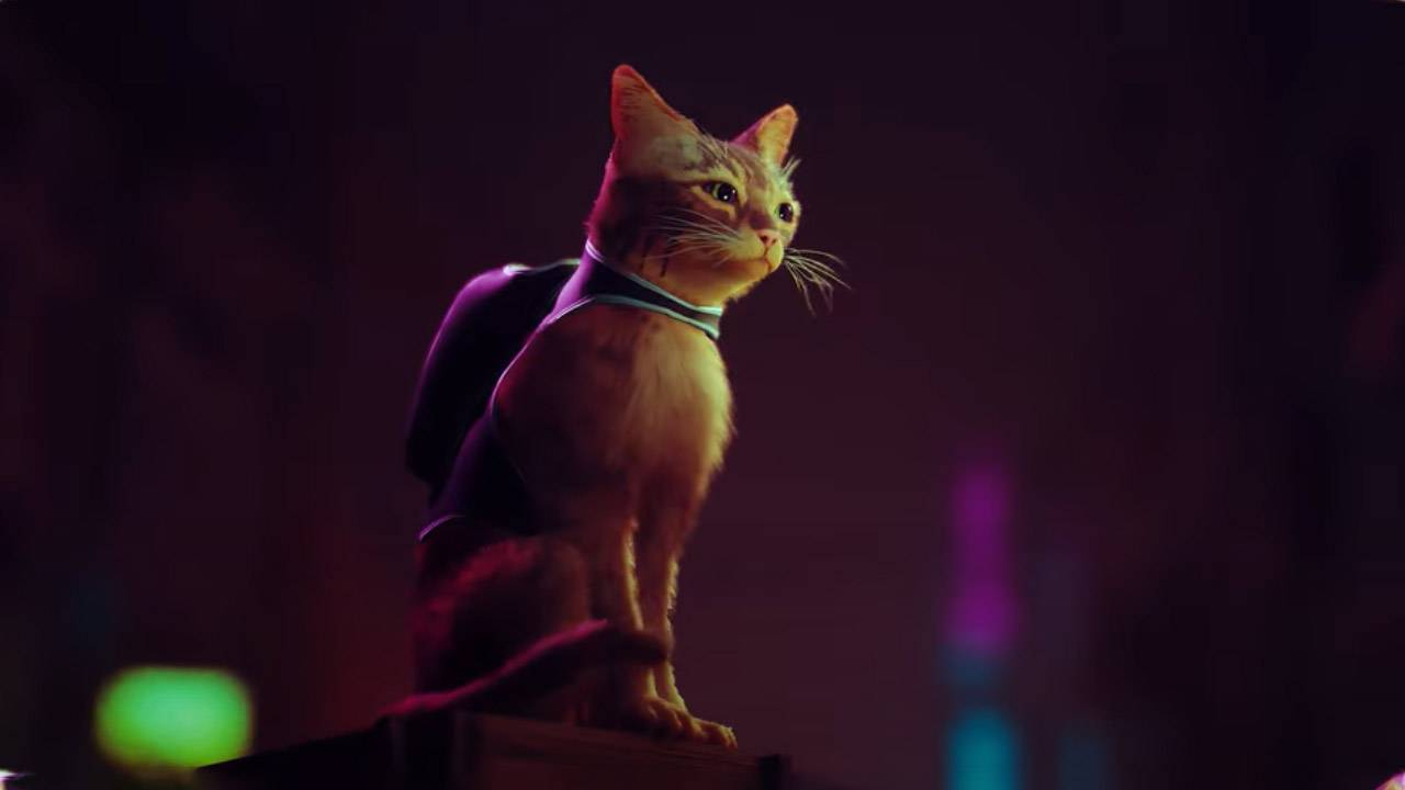 PS5's best game yet is about a stray cat