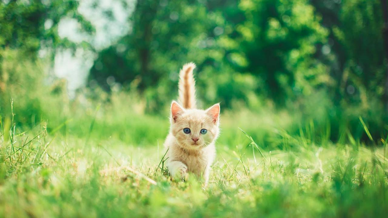 Cats were seducing humans for care more than 1,000 years ago