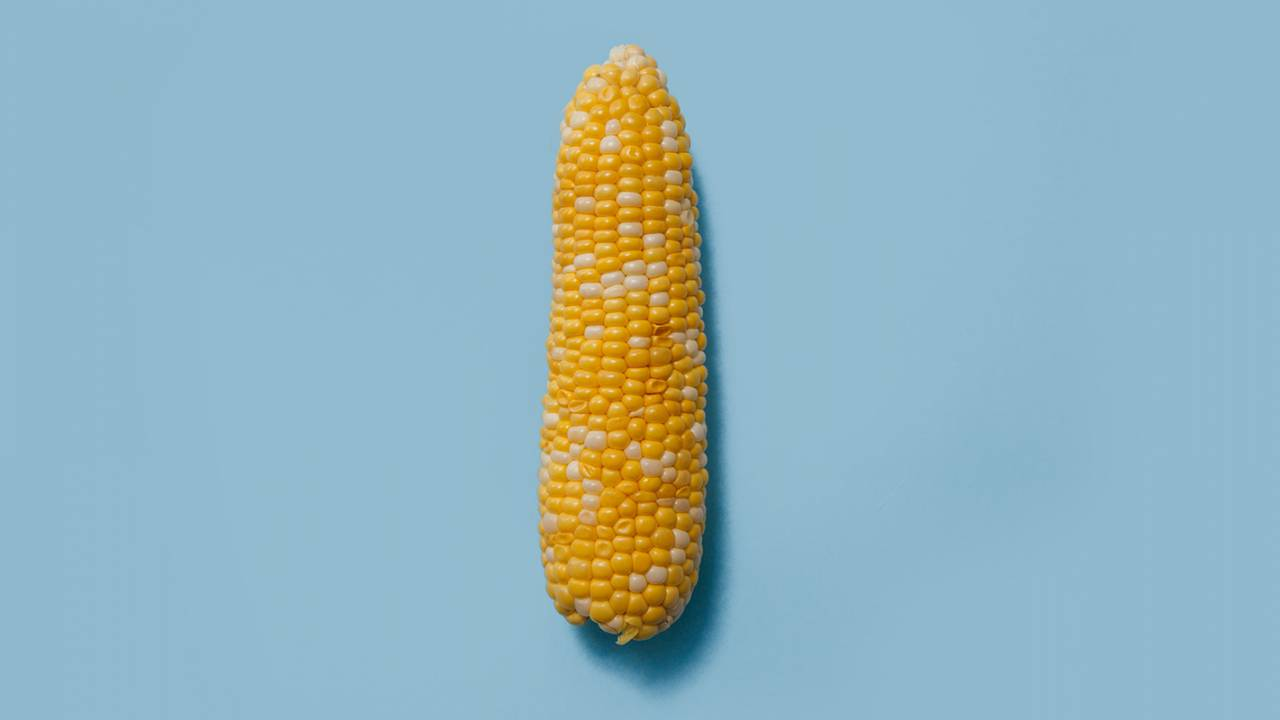 Genetically modified corn features antioxidants to cool gut inflammation