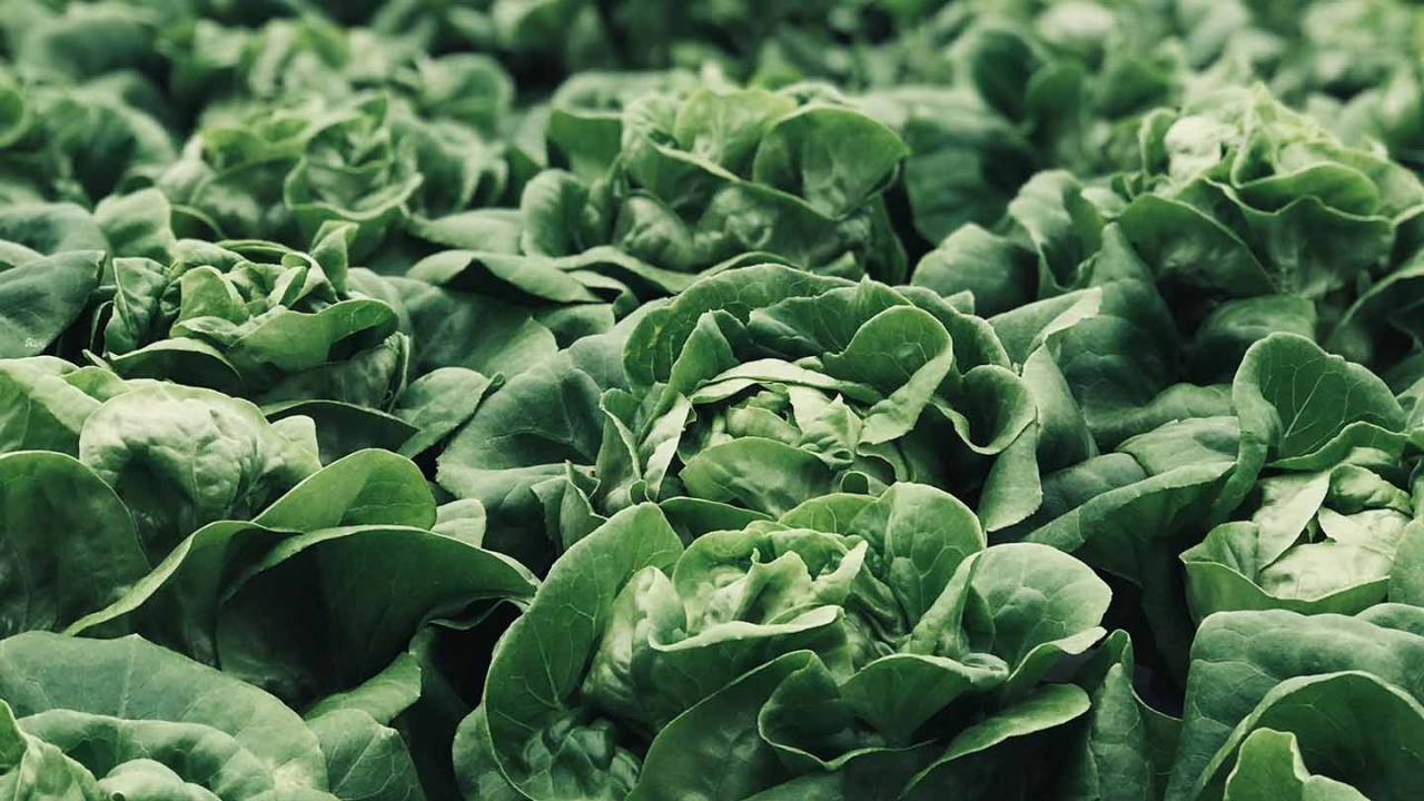 CDC investigating outbreak from salad products as case numbers spike