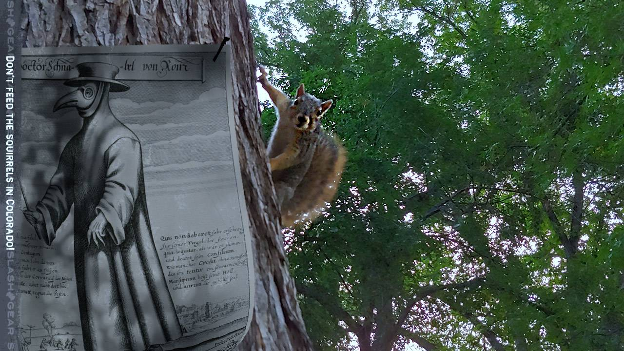 Bubonic plague squirrel found in Colorado