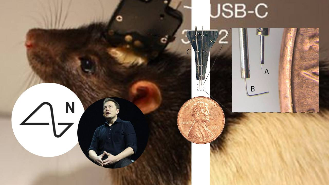 Elon Musk teased working Neuralink device: Will this rat be involved?