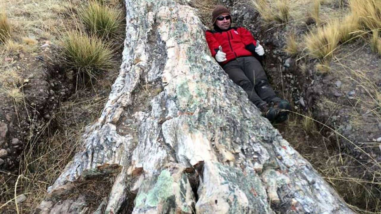 Fossilized tree discovered in Peru hints at dramatic environmental change