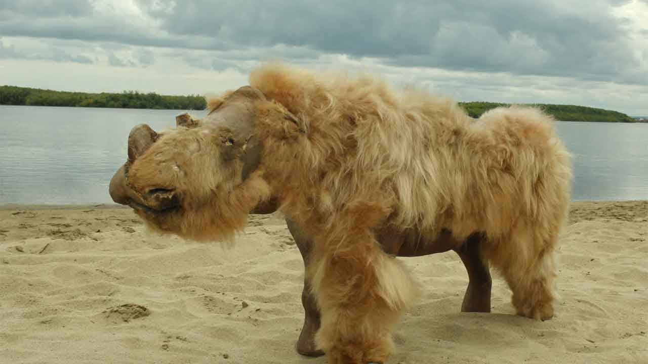 Researchers say ancient woolly rhino extinction was due to climate change