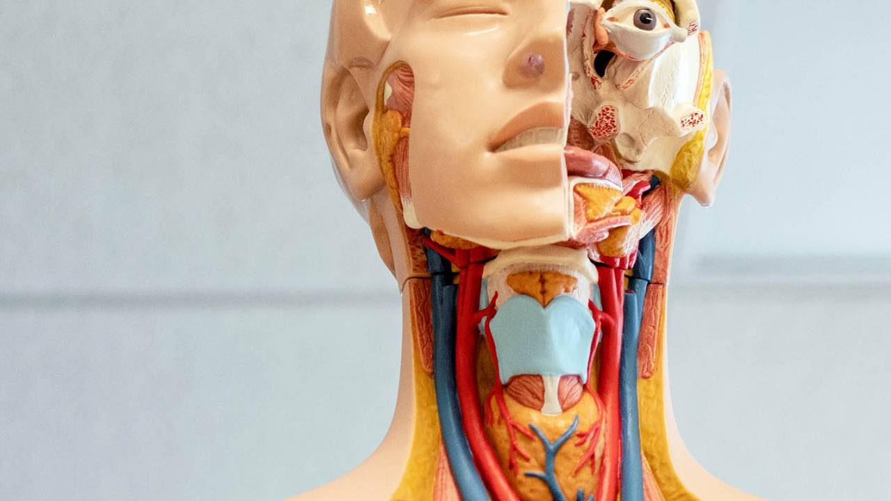 Study details surprising link between anxiety and 'silent' thyroid issue