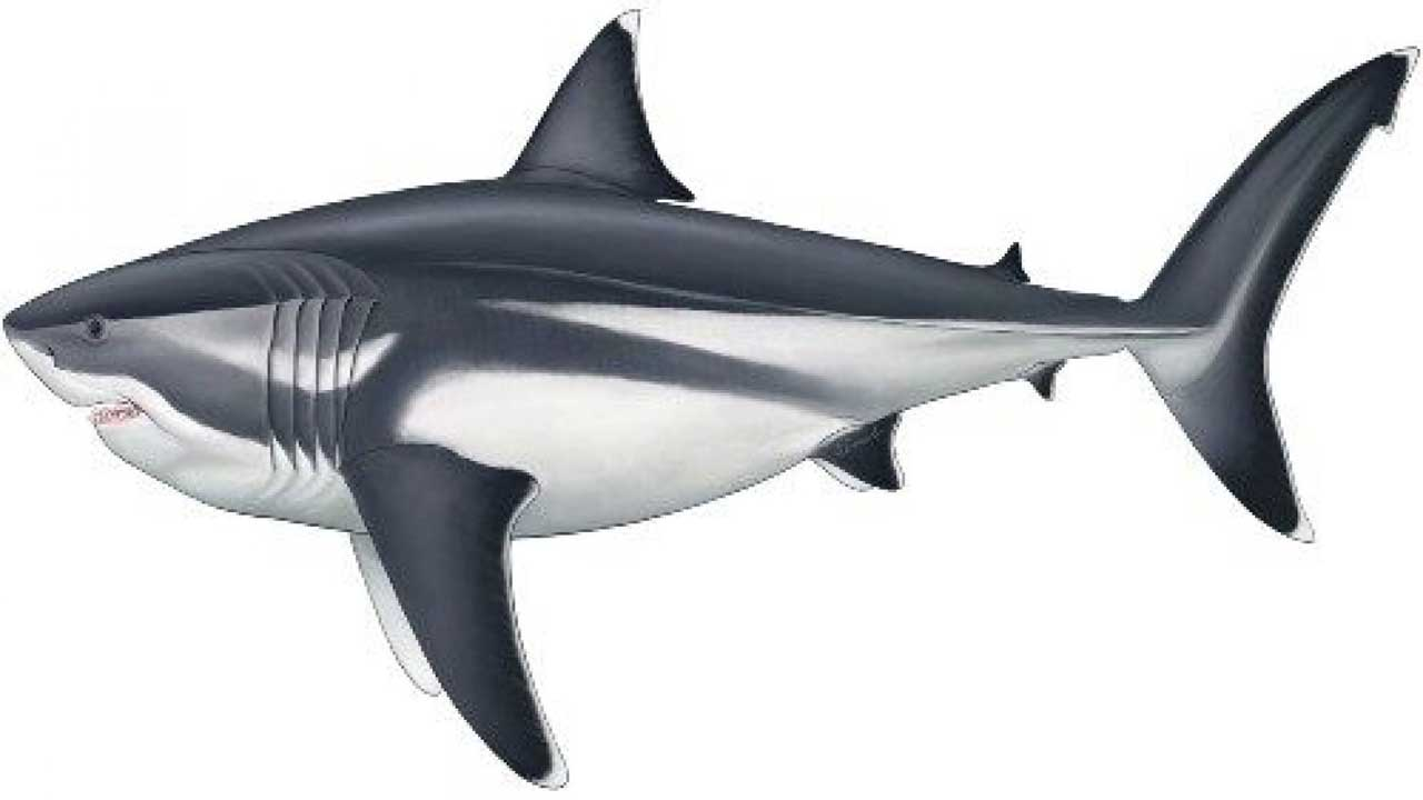 Megalodon shark could've reached over 52 feet in length