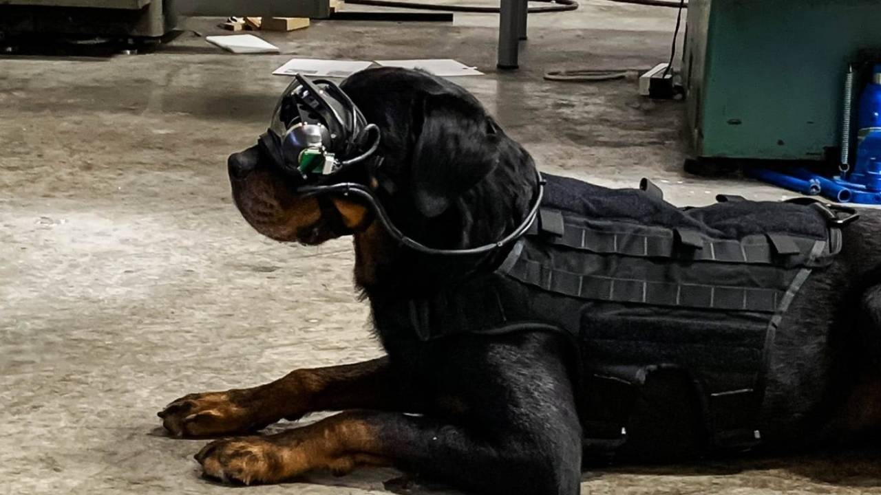 US Army dogs get AR goggle prototype for safer scouting missions