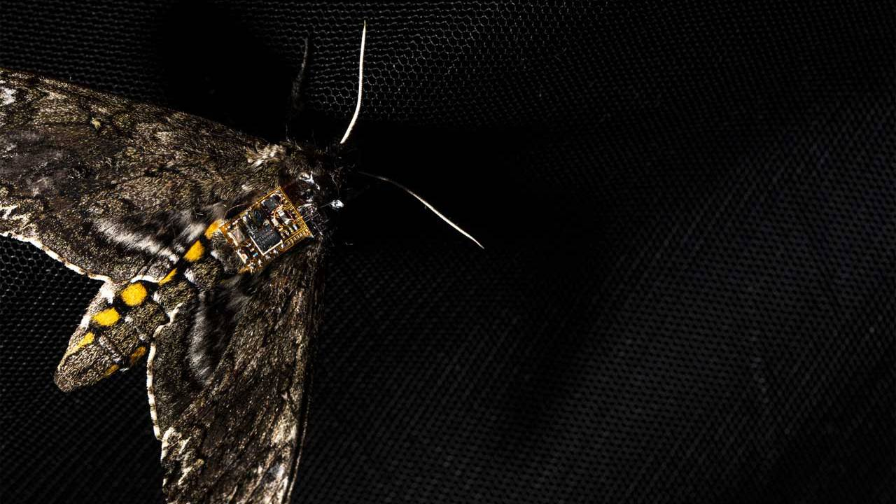 Researchers harness moths to drop sensors from the sky