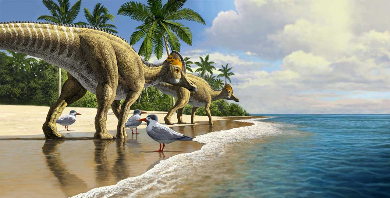 Duckbill dinosaur fossils discovered in Africa for the first time