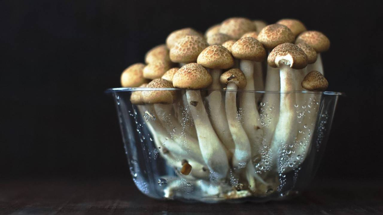 Psilocybin study offers hope for chronic migraine sufferers