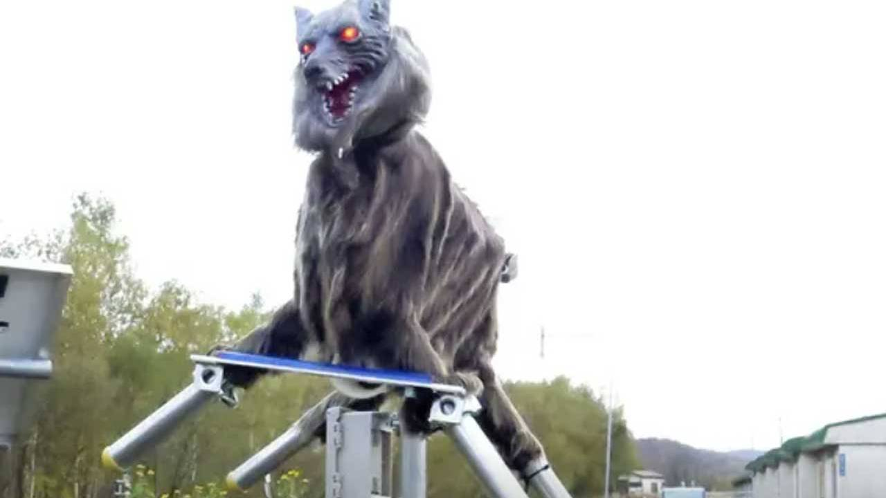Rural Japanese town relies on robotic wolves to scare away bears