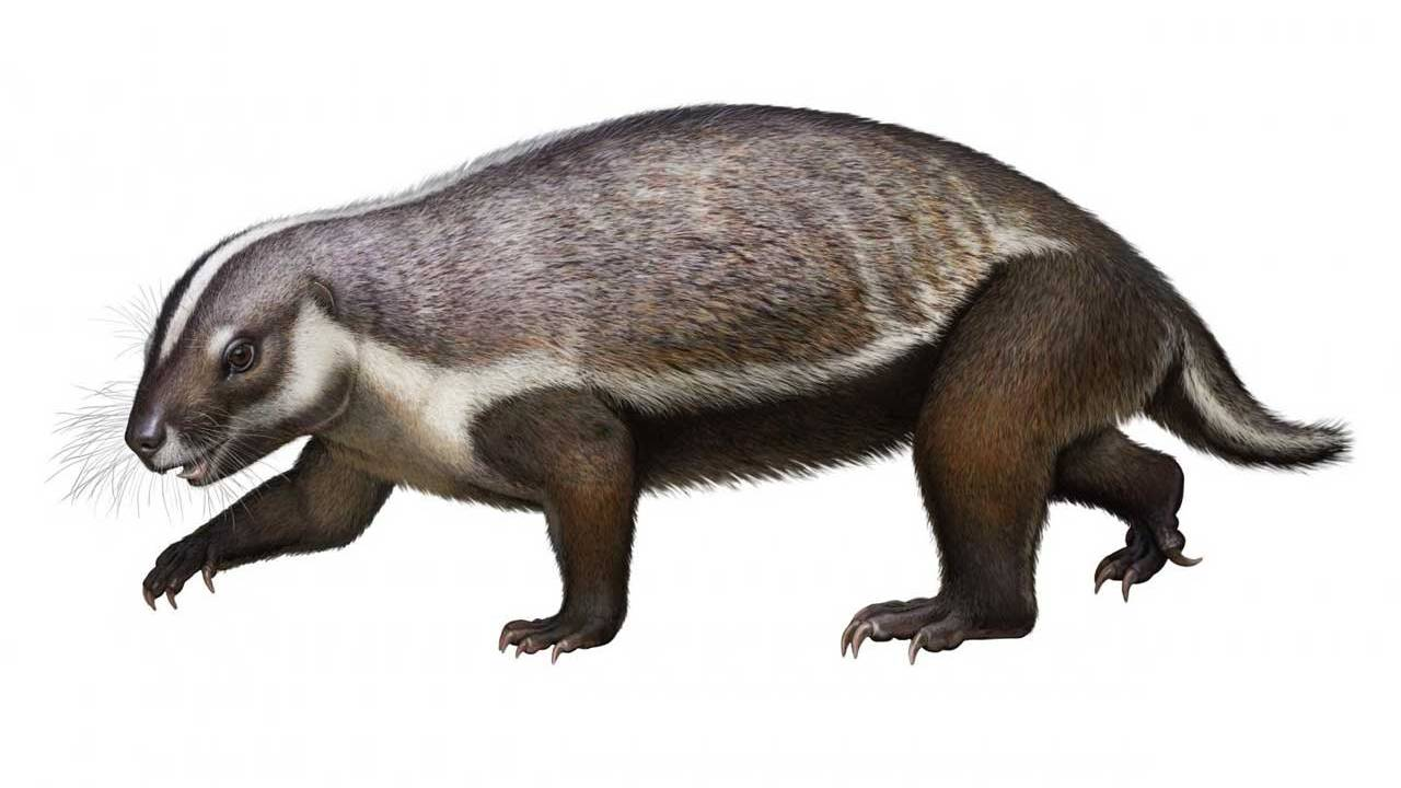 Bizarre fossil discovered of a mammal that roamed with the dinosaurs