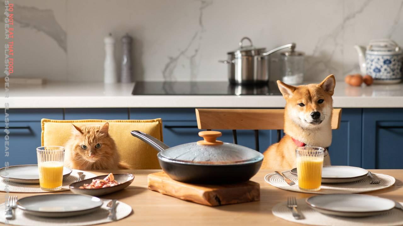 FDA recalls dog and cat food for aflatoxin risk