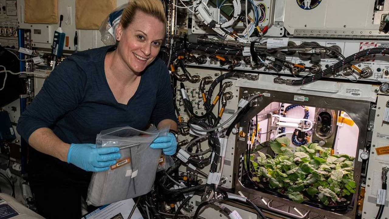 ISS astronauts harvest the first space radish crop