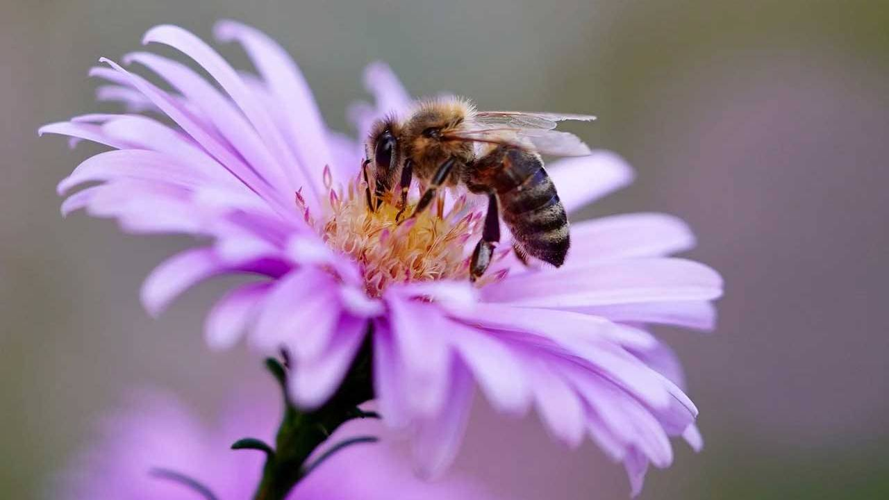 University researchers say pesticides keep bees from sleeping