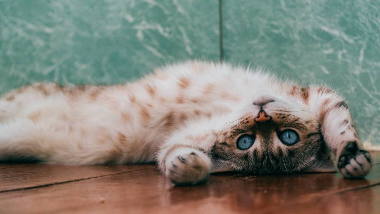 Feline obsession with catnip and silvervine may help keep bugs away