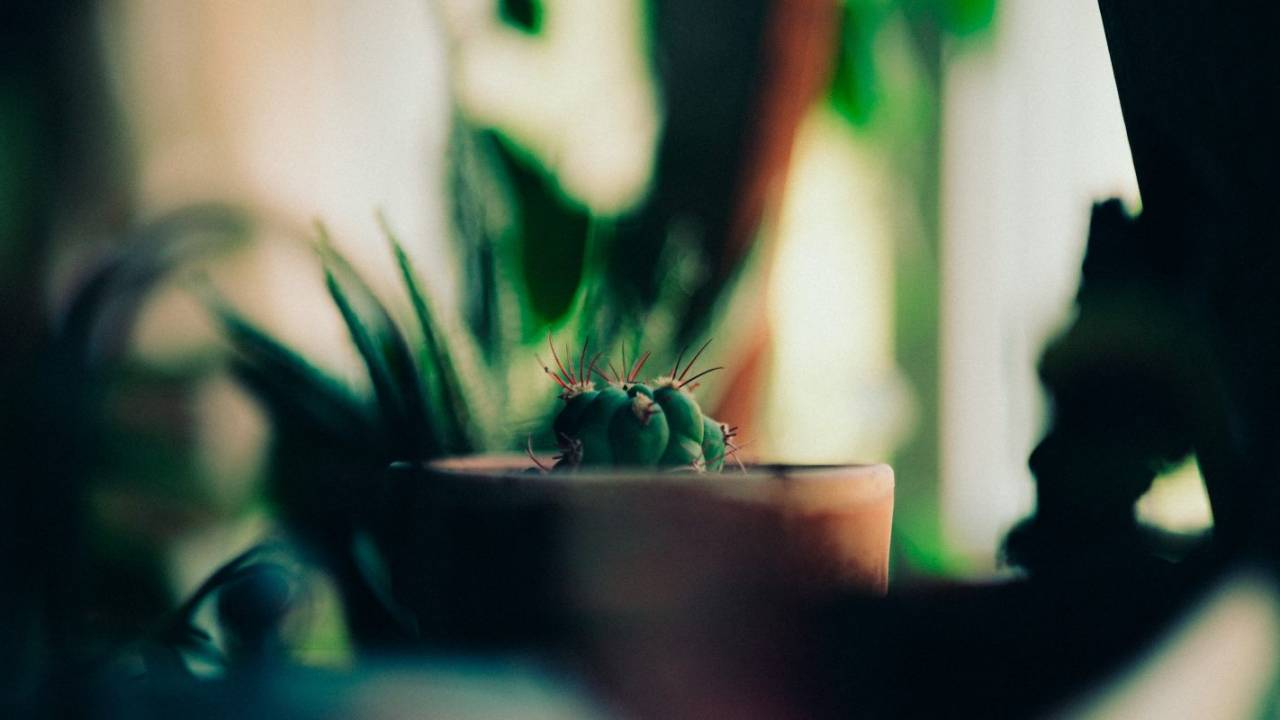 Houseplants may offer major mental health benefits during pandemic