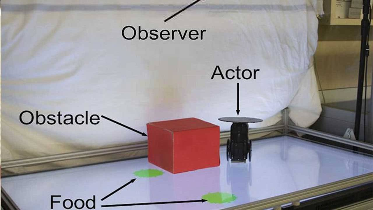 Columbia University engineers create a robot that shows basic empathy