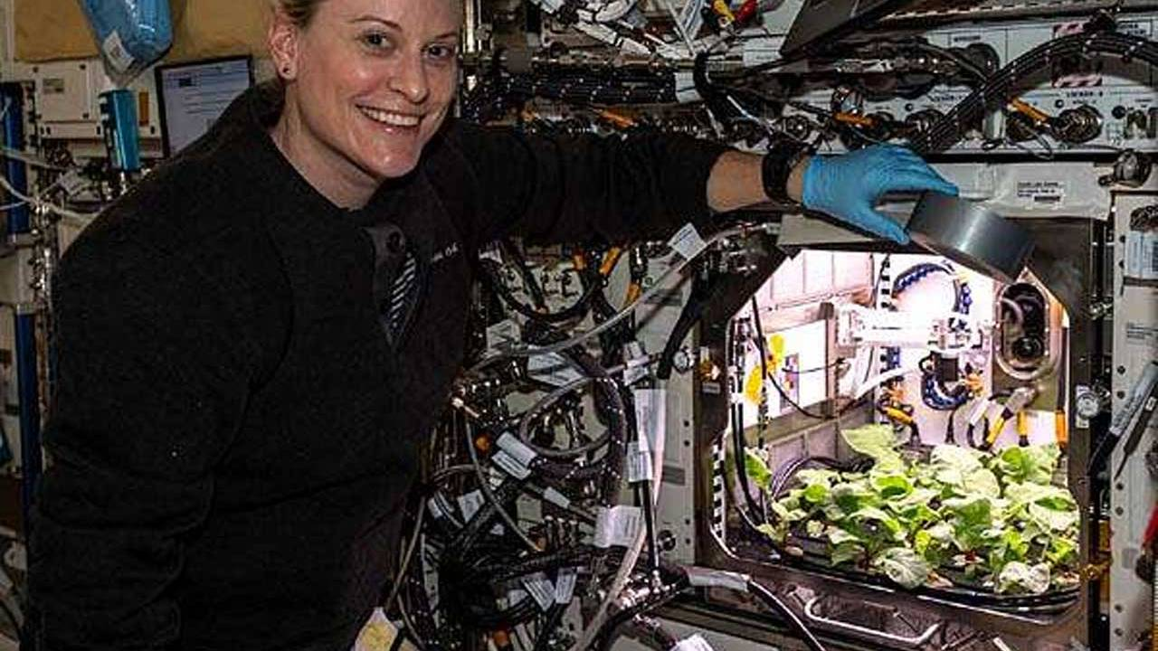 Astronauts got to eat a crop of space radishes on the ISS