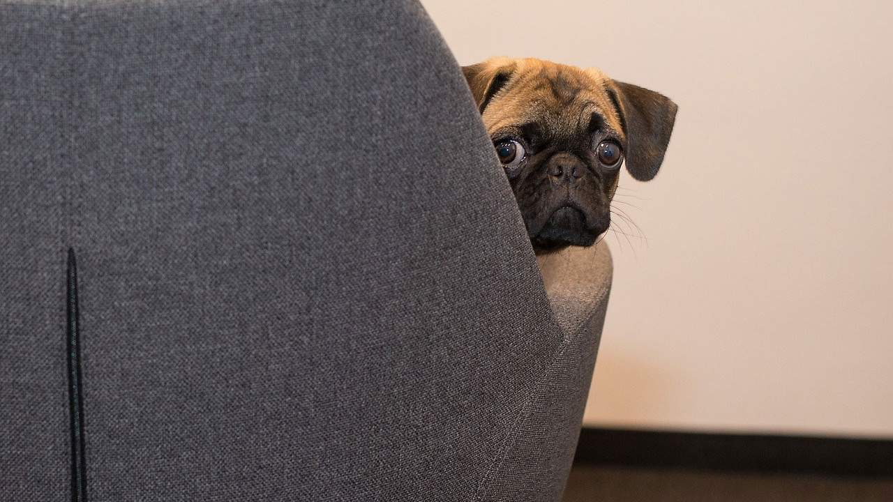 Study finds dogs are self-aware and may understand the consequences of their actions