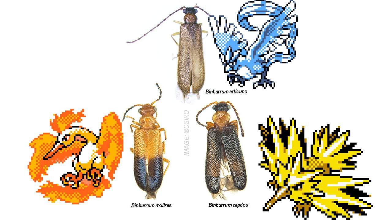Three incredibly rare beetles named after Pokemon