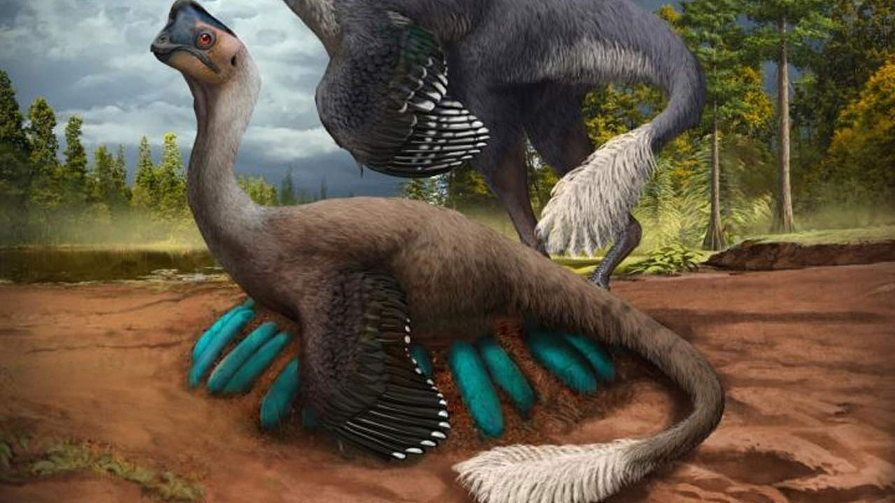 Bird-like dinosaur fossil found sitting on a nest full of fossilized eggs