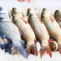 Eating certain fish may have big benefits for people with heart disease