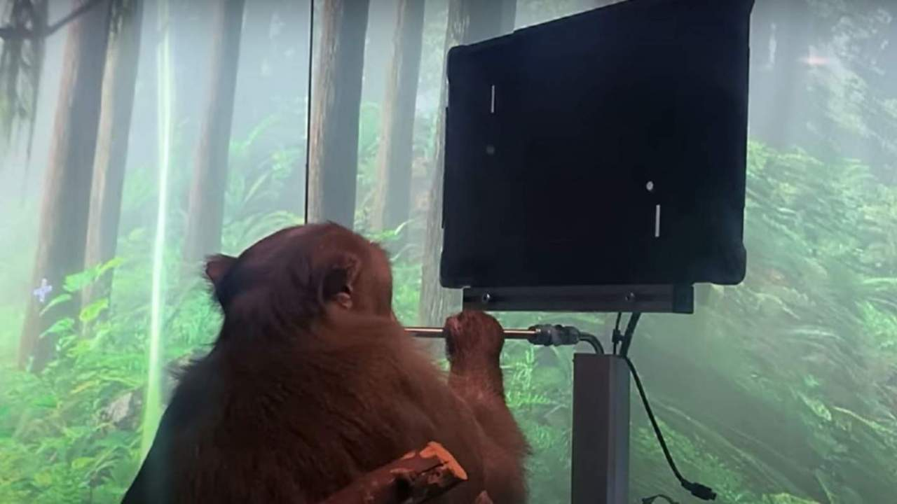 Stunning Neuralink video shows monkey playing Pong using its mind